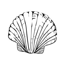 Hand-drawn Scribble From A Seashell.