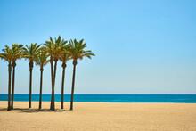 Palm Trees On A Sandy Beach Over Blue Sky And Calm Sea