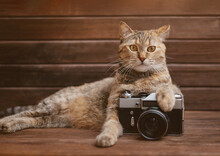 Surprised Cat Looks At The Camera. The Cat's Paw Lies On A Vintage Camera.