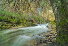 Fast River Flowing In Mountainous Forest