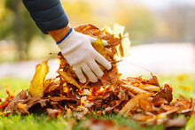 Cleaning Of Autumn Leaves In The Park. Man In Gloves Cleans The Autumn Park From Yellow Leaves. Volunteering, Cleaning, And Ecology Concept.