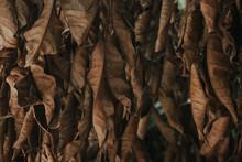 Dry Brown Leaves Texture