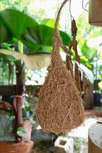 Natural Talents Of Wild Bird That Build Nest By Weaving. Weaver Bird's Nest. Consists Of Two Types, One With Two Openings At Bottom For Courting And The Other With Singular Opening For Hatching.