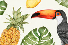 Hand Drawn Tropical Fruits Illustration