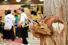 日本・奈良の鹿の写真