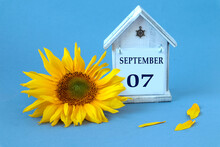 Calendar For September 7 : Decorative House With The Name Of The Month In English, Numbers 07, Yellow Sunflower Flower, Scattered Petals On A Blue Background, Side View