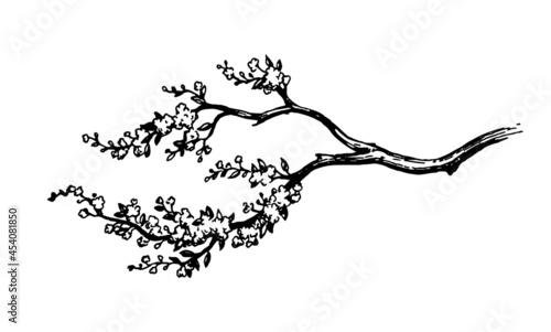 Obraz na plátně Blooming cherry tree branch.