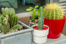 Echinocactus Grusonii And Other Cacti On A Table In An Urban Terrace