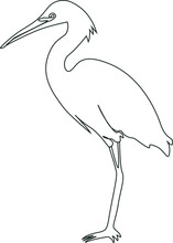 The Stork Bird Is Standing. Vector Line Art Illustration. An Isolated Image Of A Bird.