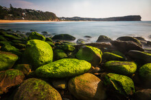 Green Moss On The Rocks At Mcmasters Beach