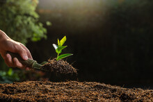 A Young Seedling Plant On A Spoon Shovel With Light Orange Sunlight. Earth Day Concept.