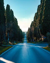 Viale Di Cipressi Bolgheri