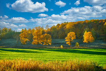 Autumn Landscape With Trees And Blue Sky.