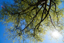Beautiful Green Trees Against The Blue Sky