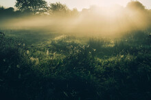 Morning Mist In The Field