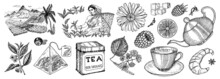 Herbal Tea Bag Brewing Cooking Directions. Teapot, Cup, Sugar, Plants, Landscape, Raspberries, Croissant, Lemon, Chamomile. The Woman Is Harvesting. Ingredients For Shop Frame. Engraved Style.