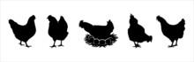 Hen Silhouettes Vector Set. Chicken Farm Illustration