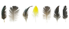 Beautiful Collection Feather Isolated On White Background