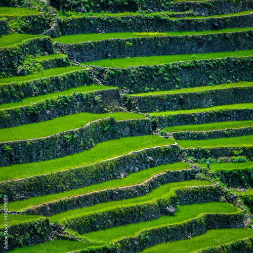 Greenview field of the magnificent Rice Terraces.