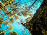 Fototapeta Na sufit - las niebo