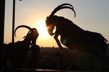 Goat Sculptures During Sunset