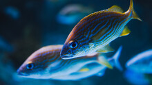 Fishes In The Aquarium Close Up View