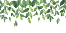 Watercolor Seamless Border, Frame, Web Banner With Simple Green Leaves And Branches. Forest Wild Herbs, Mint. Isolated On White Background