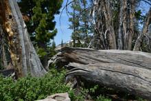 Wind Swept Tree On Mountain Top