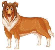 Rough Collie Dog Cartoon On White Background
