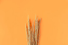 Autumn Composition With Dry Pampas Grass Reeds On Orange Background. Minimal, Stylish, Creative Flat Lay, Copy Space For Text