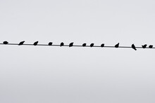 Birds Perched On Wire Monochromatic