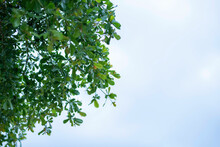 Green Leaf Frame With Blue Sky And White Clouds Background, Can Be Used As Wallpaper