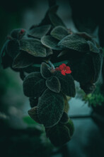 Vertical Closeup Shot Of Fuzzy Dark Green Leaves With A Tiny Red Flower In A Forest