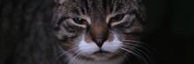 Portrait Of Cute Purring Domestic Kitten Outdoors