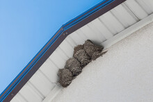 Bird's Nest Swallows Under The Roof Of The House Against The Blue Sky
