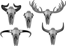 Skull And Horn
