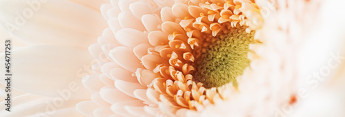 Fotografie, Obraz Beauty of a daisy flower, floral art and beauty in nature.