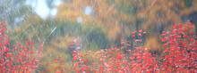 Bad Weather Rain Wind, Autumn Concept Background