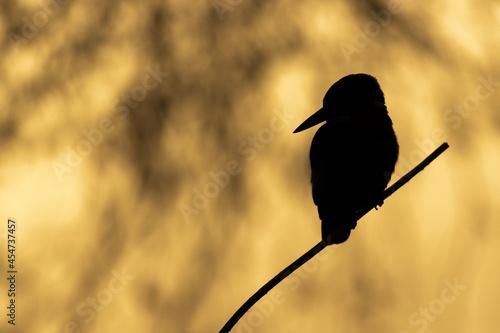 Fototapeta Silhouette of bird perching on tree branch against an orange nature background
