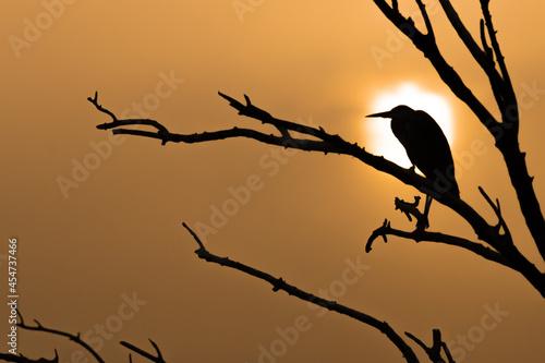 Fototapeta Silhouette of bird perching on tree branch against an orange moonlit night sky