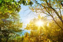 Autumn Landscape, Autumn Tree Tops Against Blue Sky, Autumn Forest Background