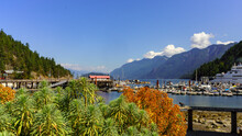 Plants And Shrubbery At Horseshoe Bay, BC,  Marina And Ferry Terminal With Spectacular Ocean And Mountain Scenery Backdrop - Summer