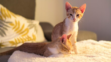 A Couple Of Kittens Waking Up From The Sofa In The House. Photography Made In Madrid, Spain.