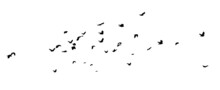 A Flock Of Flying Birds. A Large Flock Of Flying Crows. Vector Illustration