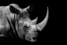 Rhinoceros , Animal Mammal Rhino , Isolated