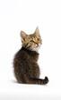 Leinwandbild Motiv tabby kitten sitting on a white background