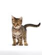 Leinwandbild Motiv cute kitten on white background