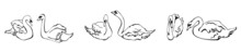 Horizontal Border With Three Pairs Of Swans On The Water. Vector Illustration Of Swans Drawn By Hand In The Sketch Style