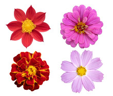 Autumn Flowers In A Garden Collection Set. Flower Isolated On White Background.