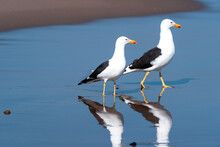 Two Seagull On The Beach